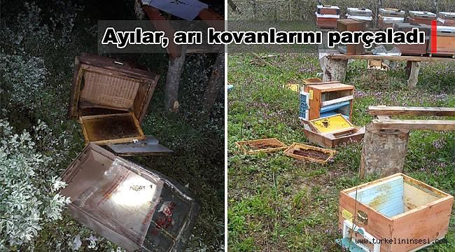 Ayılar, arı kovanlarını parçaladı
