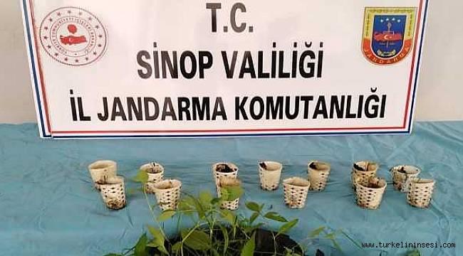 Sinop'ta 'bardakta kenevir' operasyonu