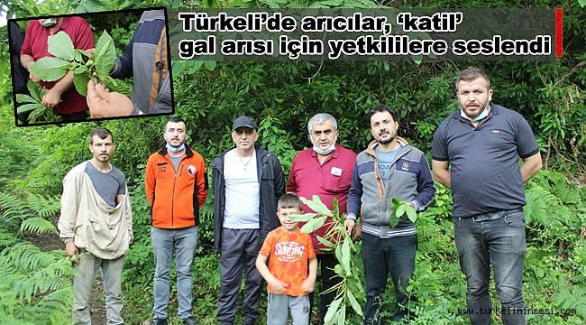 Türkeli'de arıcılar, 'katil' gal arısı için yetkililere seslendi
